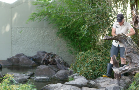 Auckland zoo otter