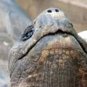 Auckland zoo Galapagos