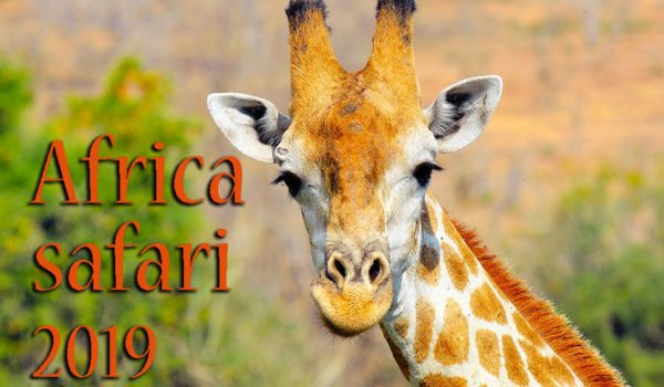 Africa safari tour