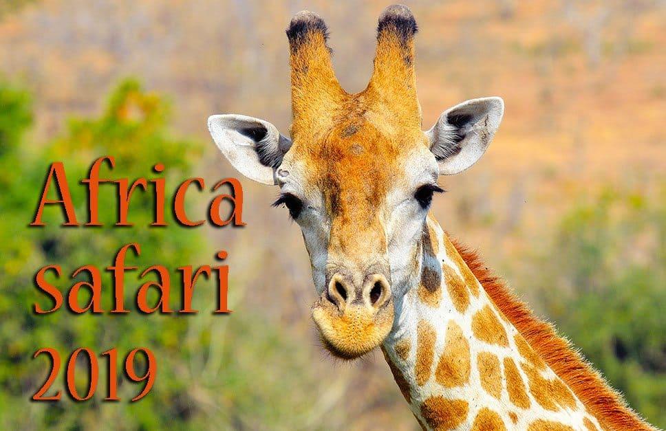 Africa safari tour