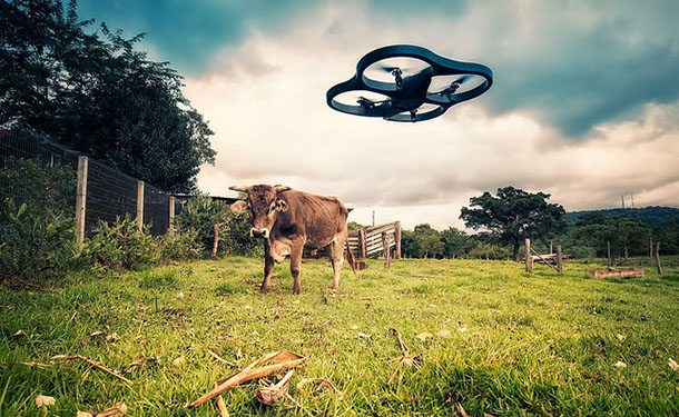 Drone and cow in paddock