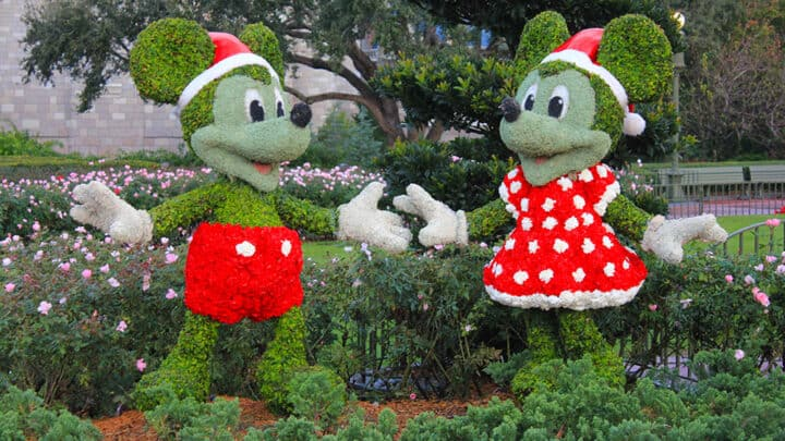 Mickey Mouse and Minnie Mouse buxus hedging