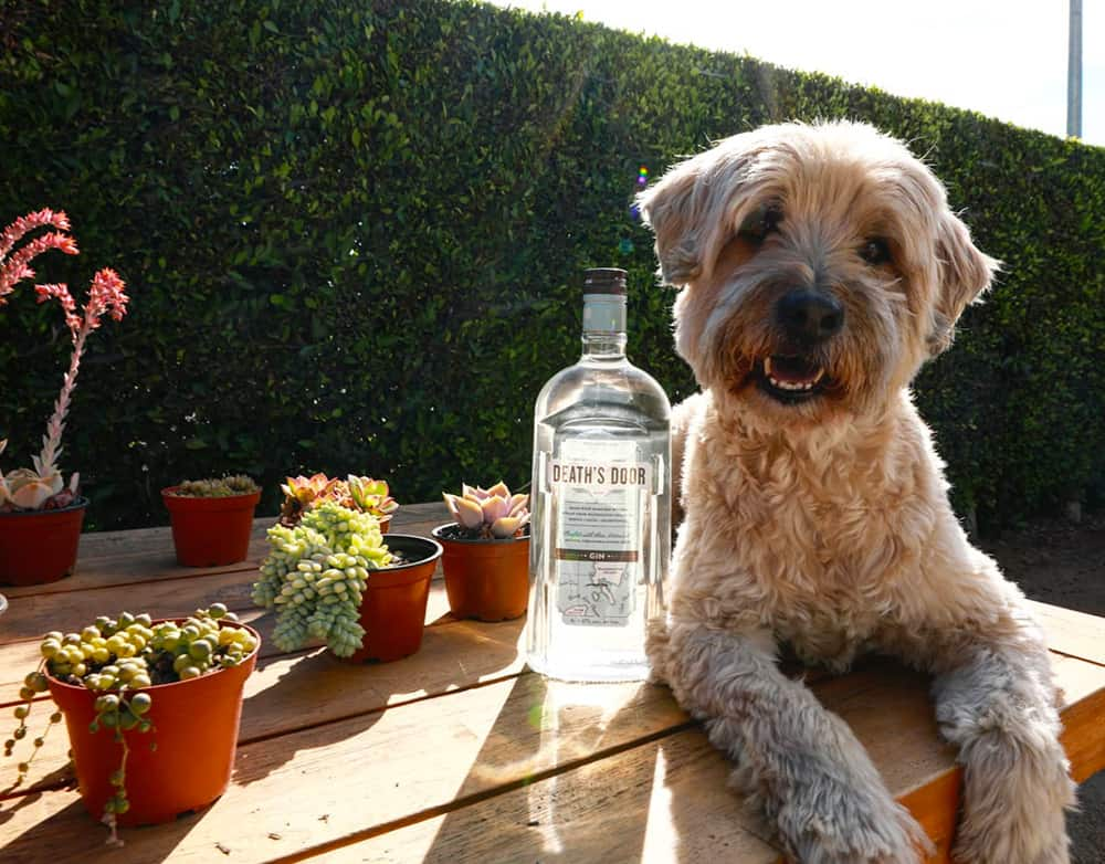 Dog and gin at Ashland Hill