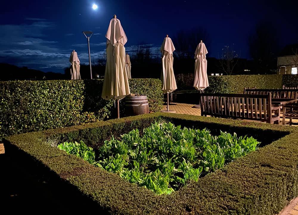 The Craggy Range salad garden under the moonlight