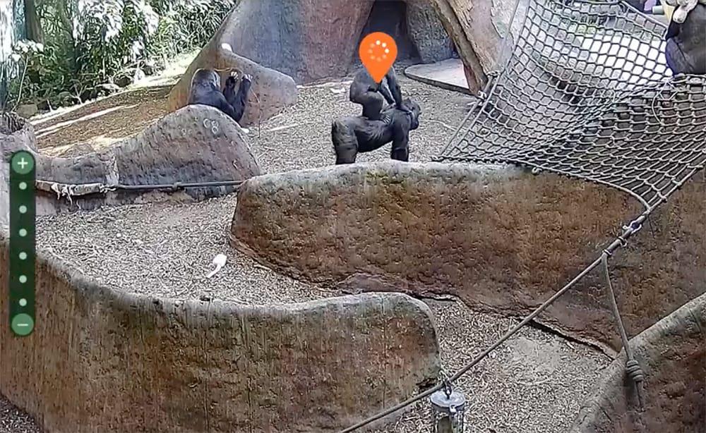 Orana Wildlife Park webcam