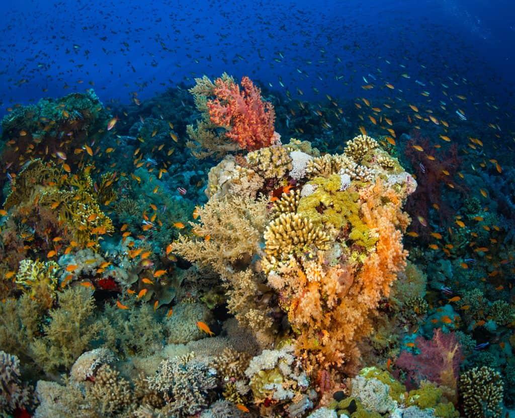 coral reef at Key Largo