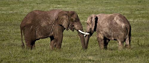ivory anniversary gifts