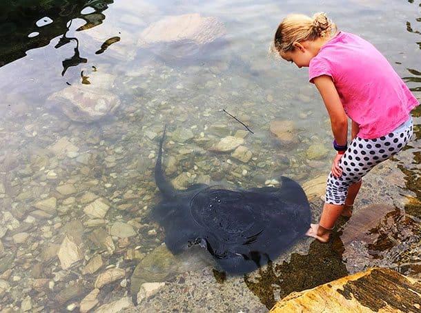 Girl feeds stingrays at Lochmara Lodge