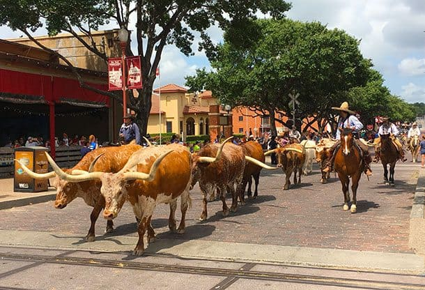 Long horns at Stockyards
