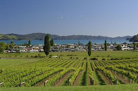 Mercury Bay, NZ