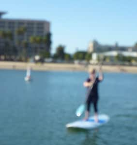 Phins paddleboarding