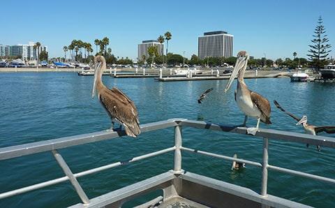 Fishing in Los Angeles