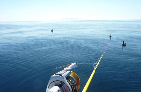 Marina del Rey fishing