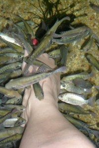 Freaky fish foot spa!