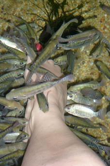 The ticklish fish foot spa travel blogger at large for Fish foot spa